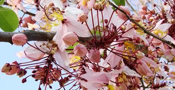 ดอกไม้ ประจำมหาลัย