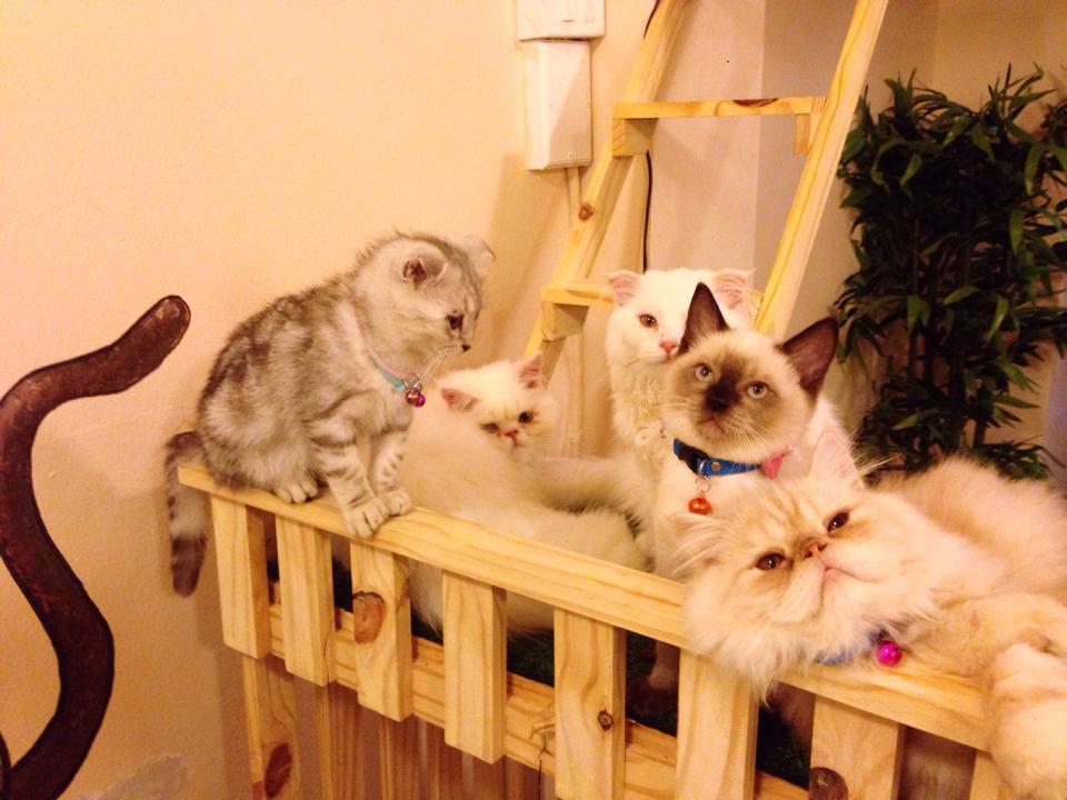 คาเฟ่แมว ม.กรุงเทพ วิทยาเขตรังสิต