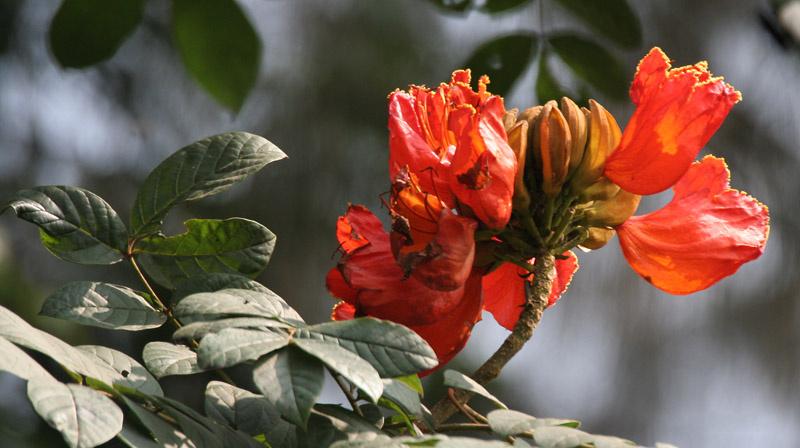 Flower KMITL
