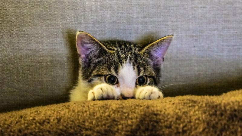 6 สัตว์เลี้ยงแสนรักสุดฮิต ของเหล่าวัยรุ่น ที่สามารถเรียนในหอพักได้