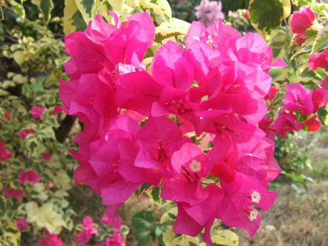 ดอกไม้ มหาวิทยาลัยราชภัฏนครปฐม