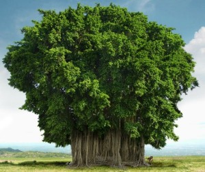 ต้นไทร
