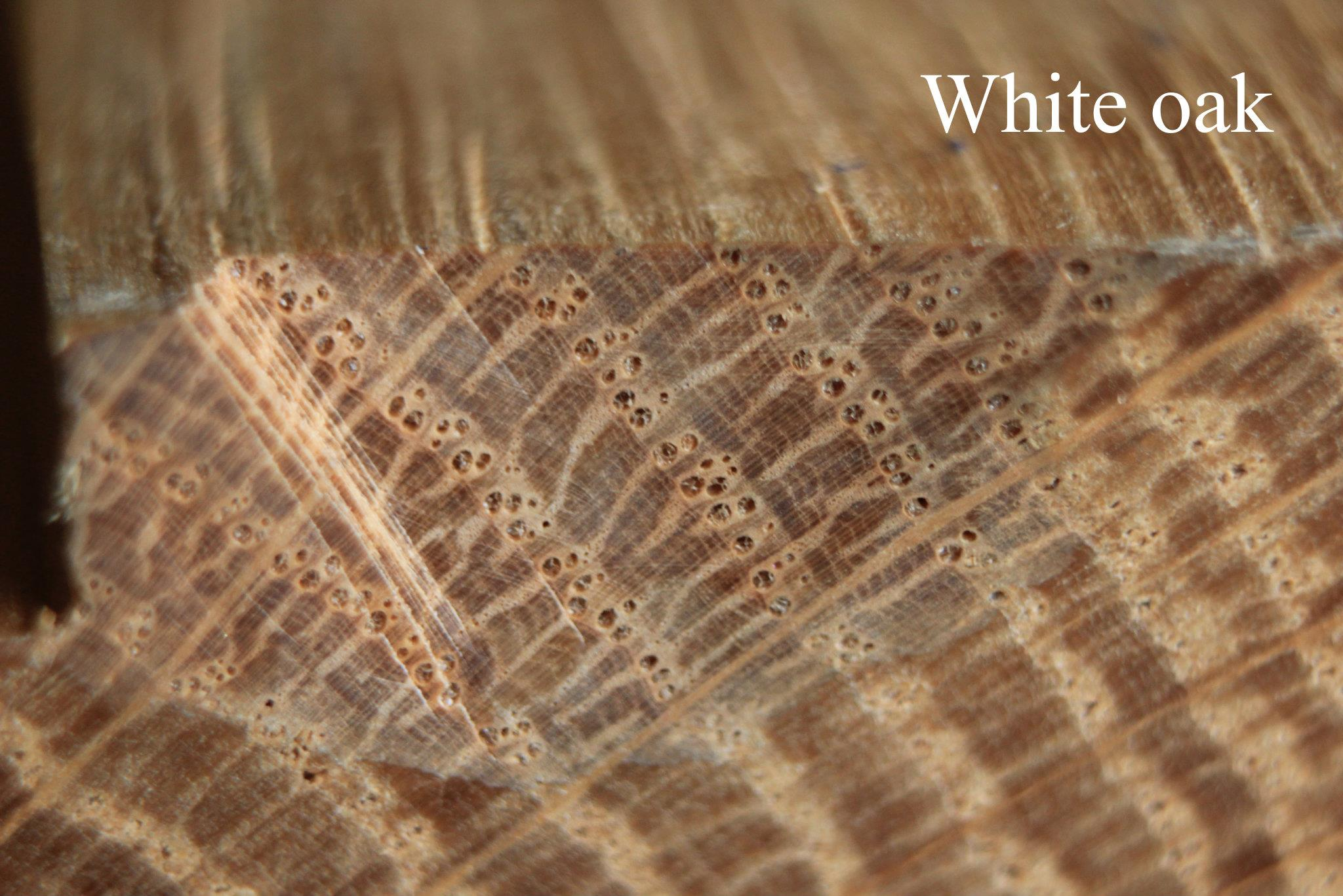ภาพโครงสร้างเนื้อไม้ White oak