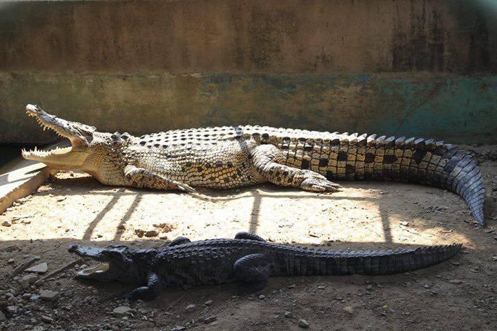พาเที่ยว สวนสัตว์ ที่พระราชวังสนามจันทร์