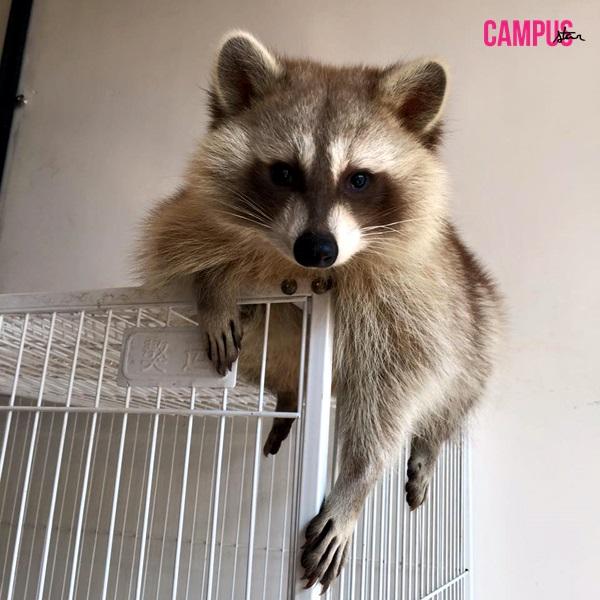 ANYWHERE campus star Issue35 little zoo สุนัขจิ้งจอก เมียร์แคท เมืองทองธานี แร็คคูน