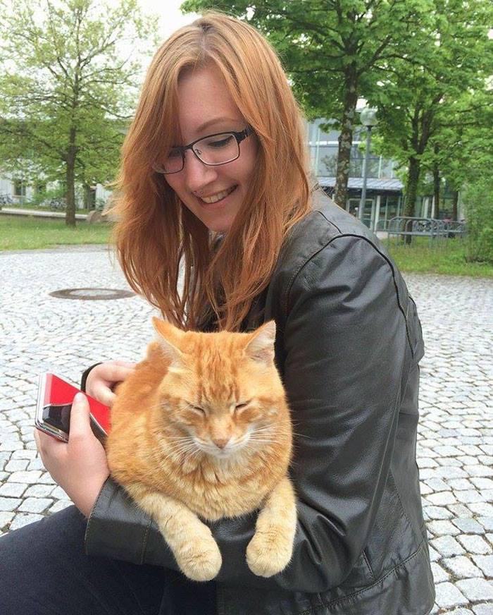 Campus เจ้าเหมียวตัวกลมสีส้ม ขวัญใจ นศ.ในเยอรมนี