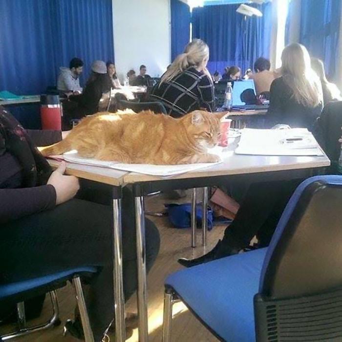 Campus เจ้าเหมียวตัวกลมสีส้ม ที่ นศ.ในเยอรมนีหลงรัก3