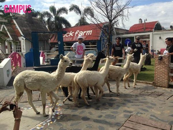 ALPACA VIEW FARM & CUISINE ANYWHERE issue38 ร้านอาหารน่านั่ง สวนสัตว์น้อยกลางเมือง
