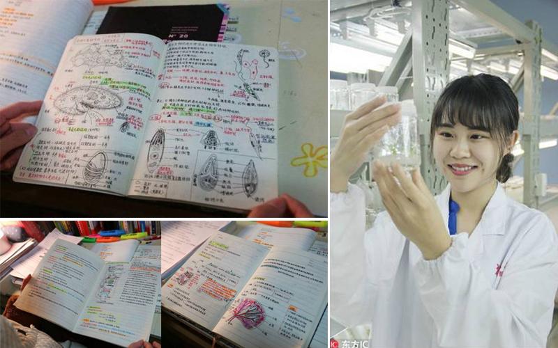 นักศึกษา นักศึกษาจีน ประเทศจีน สมุดโน๊ต เลคเชอร์