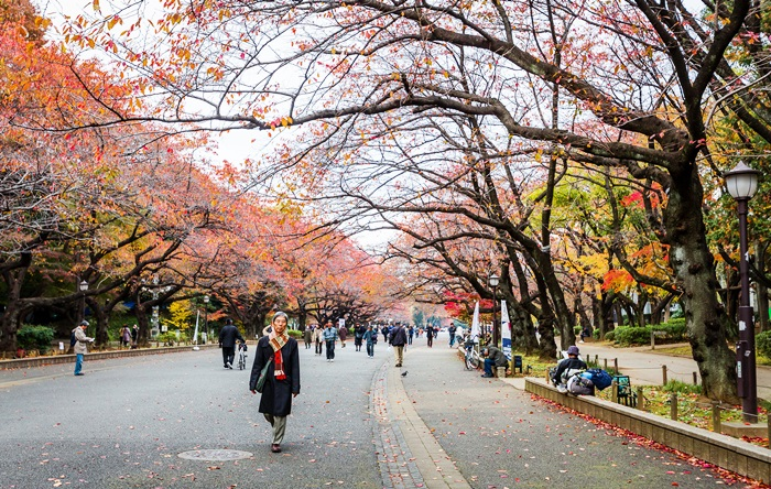 ข่าวการศึกษาญี่ปุ่น เรียนต่อต่างประเทศ เรียนต่อประเทศญี่ปุ่น