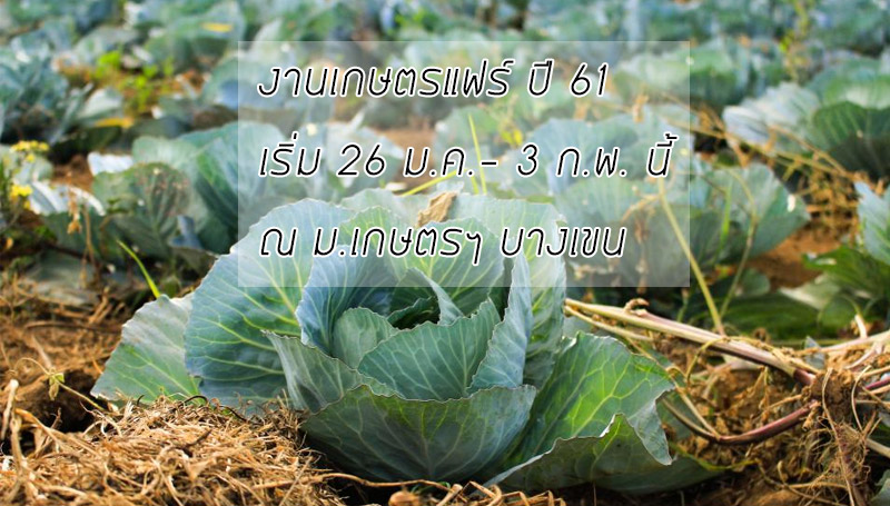 ม.เกษตร เกษตรแฟร์ เกษตรแฟร์ 61