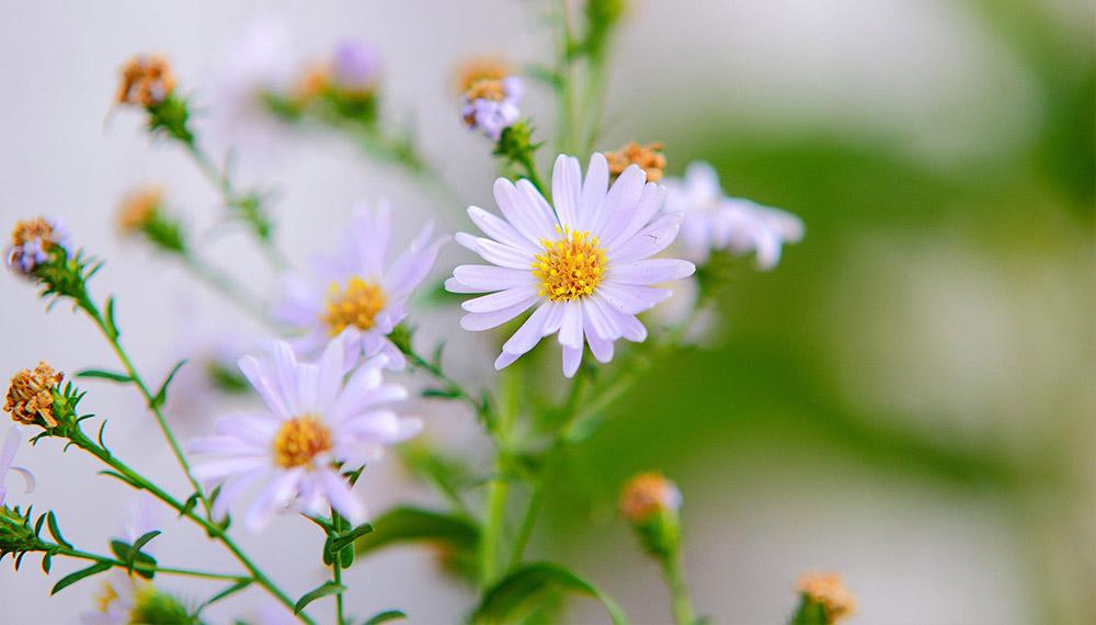 bloom = ดอกไม้, การออกดอก, การแย้มบาน