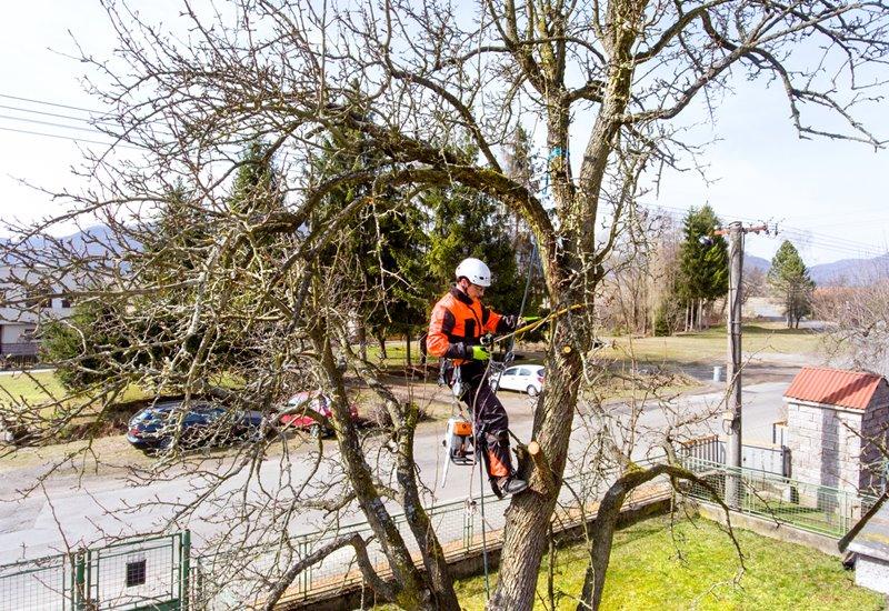 รุกขกร ผู้ดูแลต้นไม้ใหญ่ในเมือง