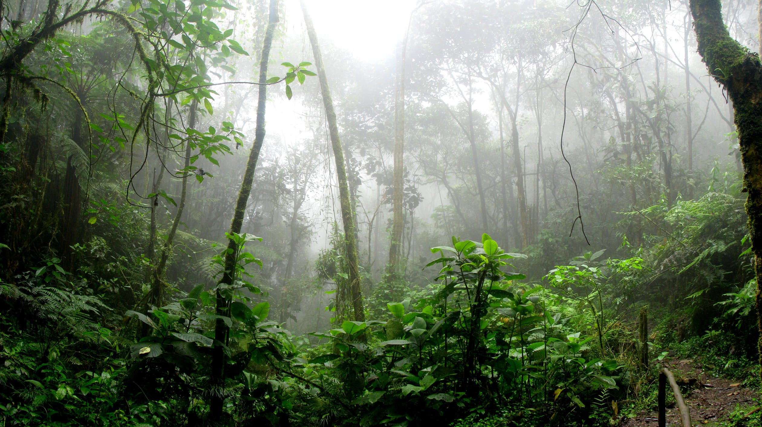 rainforest = ป่าทึบเขตร้อน