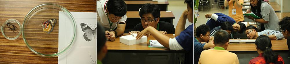 การแข่งขันเซทแมลงหนึ่งเดียวของไทย