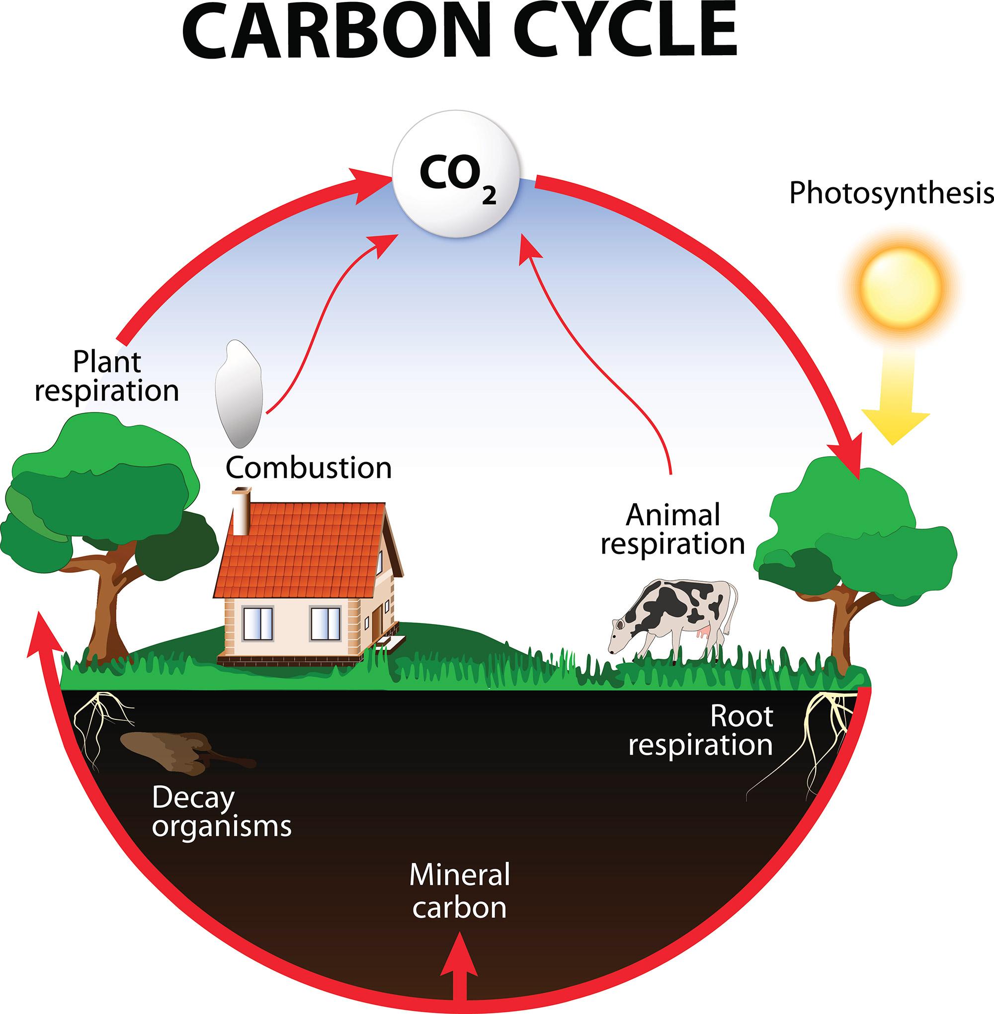 กระบวนการสังเคราะห์ด้วยแสง (photosynthesis) - วิชาชีววิทยา