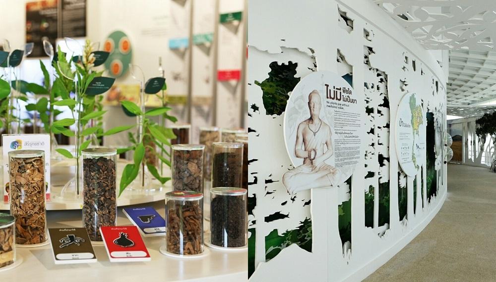 สมุนไพร อุทยานการเรียนรู้ อุทยานธรรมชาติวิทยาสิรีรุกขชาติ แหล่งเรียนรู้ธรรมชาติ