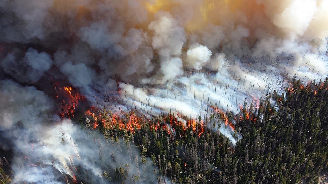 ดีเทคเตอร์มลพิษแบบเรียลไทม์ / ภาพควันดำจากเหตุการณ์ไฟไหม้ป่า