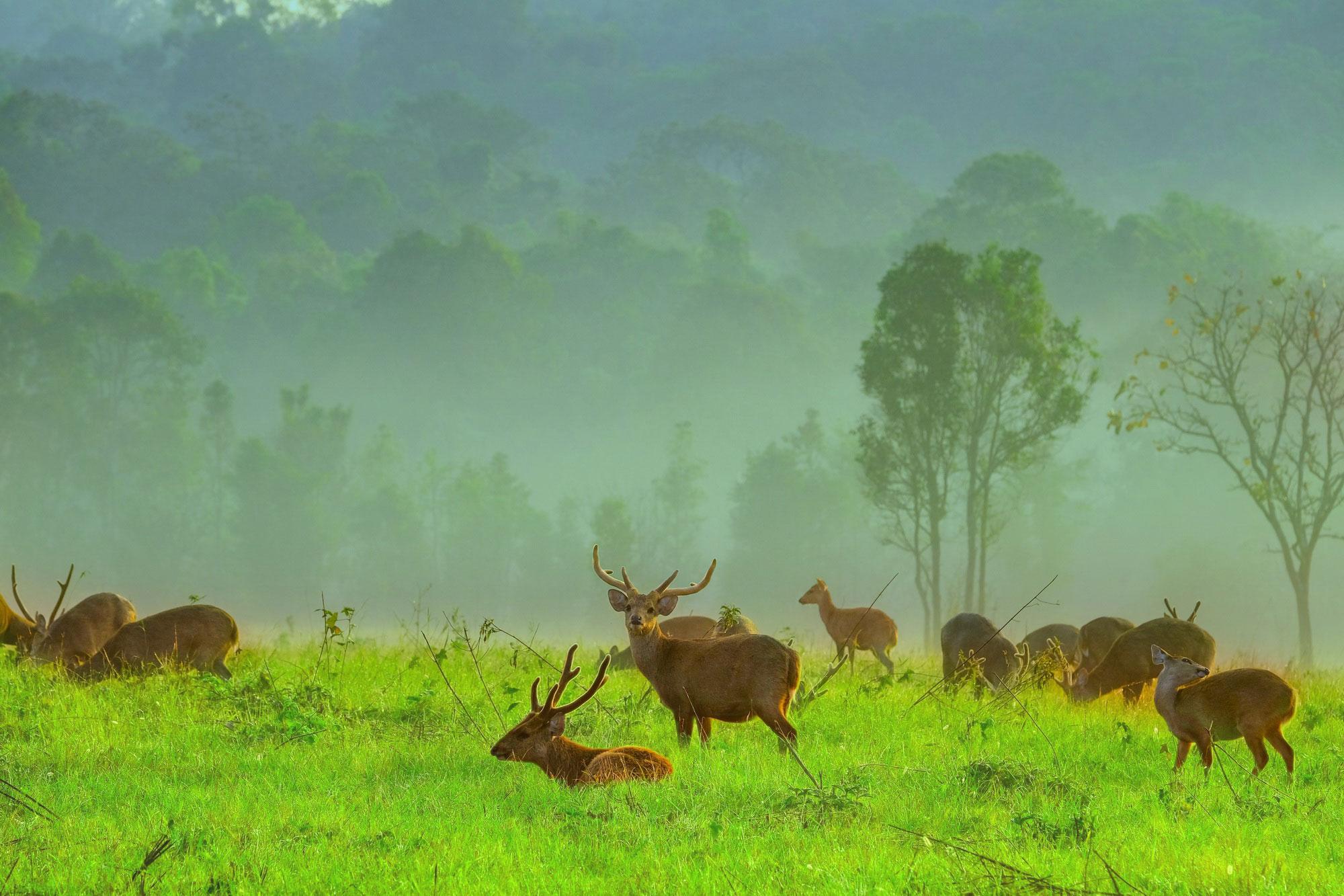 เขตรักษาพันธุ์สัตว์ป่าภูเขียว-ทุ่งกะมัง จ.ชัยภูมิ
